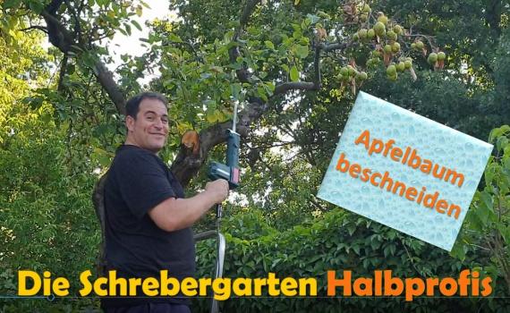 schrebergarten, tutorial, garten, gärtner, kleingarten, kleingärtner, youtube, halbprofis, gartenarbeit, picoftheday, projektschrebergarten, gartentipps, gartenliebe, gartenrundgang, gaygarden, parzelle, Berlin, vlog, gartenvlog, triebe, instagardens, gewächshausliebe, laubenliebe, gardeninspiration, obstbaum, kirsche, garden, gardening, schrebergarten, schrebergartenliebe, schrebergartenglück, laube, gemüsebeet, gemüsegarten, obst, instagram, instagood, instaplants, instagardens, insta, nutzgarten, garden, garten, plants, pflanzen, mygarden, gartenzeit, gardendesign, gardenliving, jardin, homesweethome, homegarden, gardening, garden_styles, gartengestaltung, gartenliebe, meingarten, frühling, backyard, modernhome, mygardenlife, lovemygarden, rose, rosen, beschneiden, schneiden