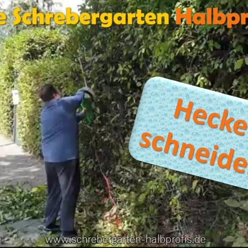 schrebergarten, tutorial, garten, gärtner, kleingarten, gartenarbeit, gartentipps, gartenliebe, gaygarden, parzelle, Berlin, laubenliebe, garden, gardening, gaygarden, gaygardener, schrebergarten, schrebergartenliebe, pflanzen, gartenzeit, meingarten, hecke