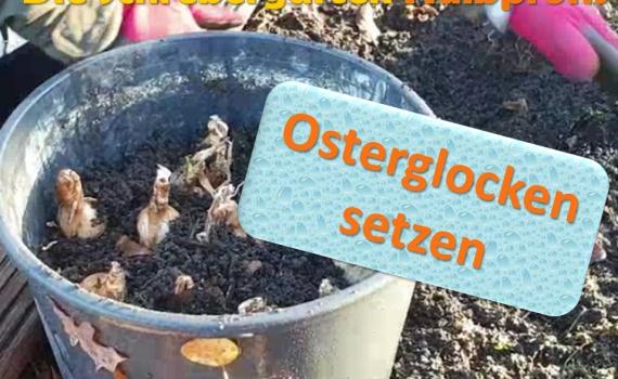 Berlin, vlog, gartenvlog, triebe, instagardens, gewächshausliebe, laubenliebe, gardeninspiration, obstbaum, kirsche, garden, gardening, schrebergarten, schrebergartenliebe, schrebergartenglück, laube, gemüsebeet, gemüsegarten, obst, instagram, instagood, instaplants, instagardens, insta, nutzgarten, garden, garten, plants, pflanzen, mygarden, gartenzeit, gardendesign, gardenliving, jardin, homesweethome, homegarden, gardening, garden_styles, gartengestaltung, gartenliebe, meingarten, frühling, backyard, modernhome, mygardenlife, lovemygarden, rose, rosen, beschneiden, schneiden