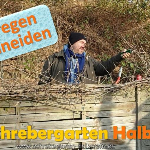 schrebergarten, tutorial, garten, gärtner, kleingarten, gartenarbeit, gartentipps, gartenliebe, gaygarden, parzelle, Berlin, laubenliebe, garden, gardening, gaygarden, gaygardener, schrebergarten, schrebergartenliebe, pflanzen, gartenzeit, meingarten, Parzelle, gartenblog, binimgarten, gartenglück, blauregen