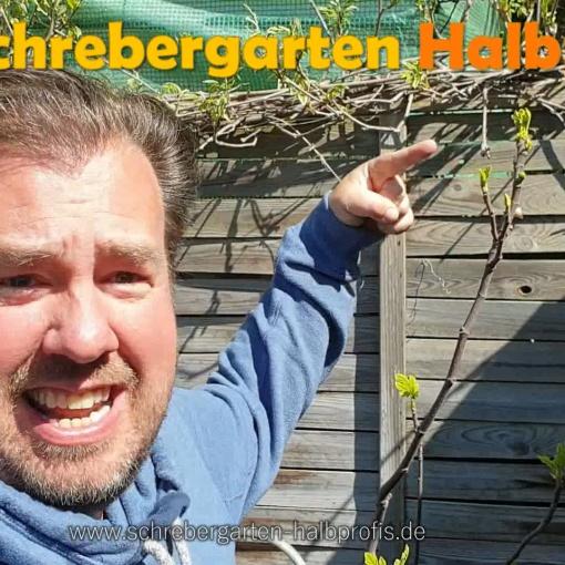 schrebergarten, tutorial, garten, gärtner, kleingarten, gartenarbeit, gartentipps, gartenliebe, gaygarden, parzelle, Berlin, laubenliebe, garden, gardening, gaygarden, gaygardener, schrebergarten, schrebergartenliebe, pflanzen, gartenzeit, meingarten, Parzelle, gartenblog, binimgarten, gartenglück, feige, feigenbaum, ernte