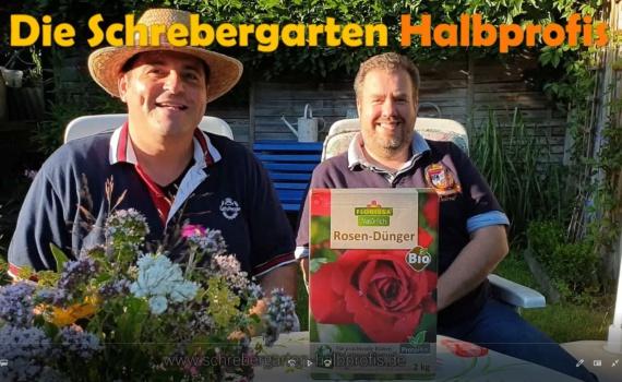 soraso, florissa, rosen-Dünger, rosen