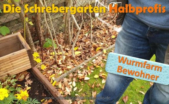 schrebergarten, tutorial, garten, gärtner, kleingarten, gartenarbeit, gartentipps, gartenliebe, gaygarden, parzelle, Berlin, laubenliebe, garden, gardening, gaygarden, gaygardener, schrebergarten, schrebergartenliebe, pflanzen, gartenzeit, meingarten, Parzelle, gartenblog, binimgarten, gartenglück, Wurmfarm sleber bauen, wurmfarm, wurmfarm anlegen