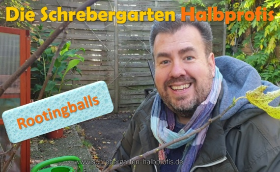 schrebergarten, tutorial, garten, gärtner, kleingarten, gartenarbeit, gartentipps, gartenliebe, gaygarden, parzelle, Berlin, laubenliebe, garden, gardening, gaygarden, gaygardener, schrebergarten, schrebergartenliebe, pflanzen, gartenzeit, meingarten, Parzelle, gartenblog, binimgarten, gartenglück